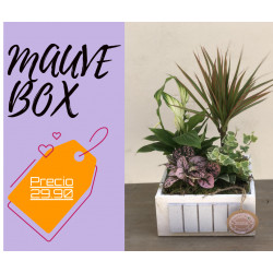 MAUVE BOX