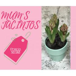MUM`S JACINTOS